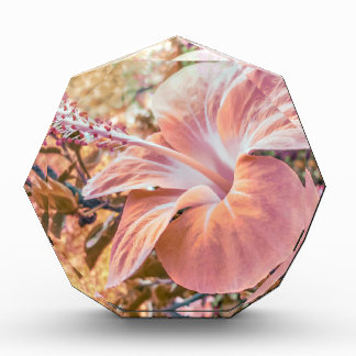 Fantasy Colors Hibiscus Flower Digital Photography Award