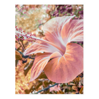 Fantasy Colors Hibiscus Flower Digital Photography Postcard