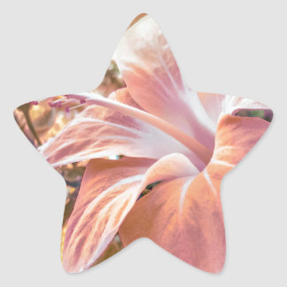 Fantasy Colors Hibiscus Flower Digital Photography Star Sticker