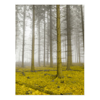 fantasy forest with fog and yellow foliage postcard