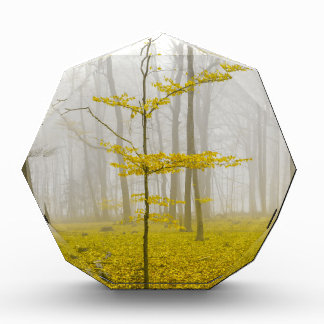 Fantasy forest with fog and yellow leaves award