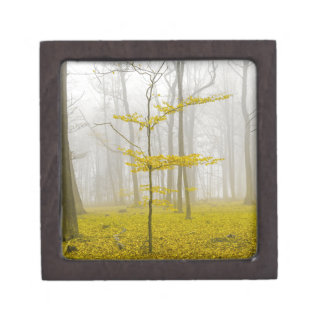 Fantasy forest with fog and yellow leaves jewelry box