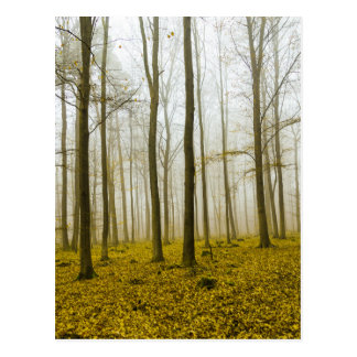Fantasy forest with fog and yellow leaves postcard