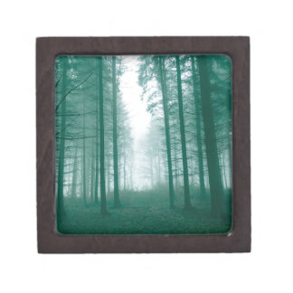 Fantasy forest with fog in Green Gift Box