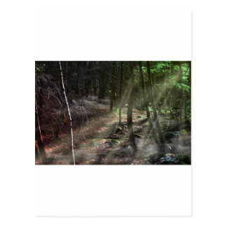 Fantasy Forest with Sunbeams Postcards