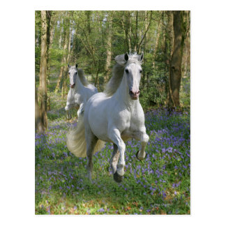Fantasy Horses: Bluebell Wood Postcard