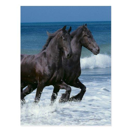 Fantasy Horses: Friesians & Sea Postcard