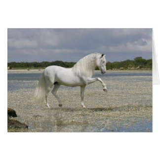 Fantasy Horses: Lord of the Lake Card