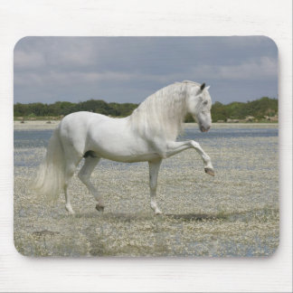 Fantasy Horses: Lord of the Lake Mouse Pad