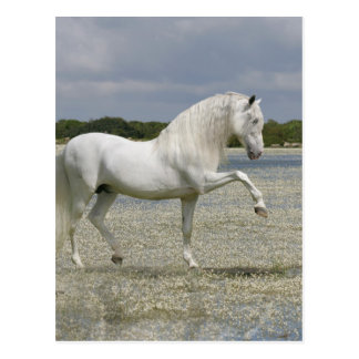 Fantasy Horses: Lord of the Lake Postcard