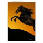 Fantasy Horses: Mountain Sunset Greeting Card