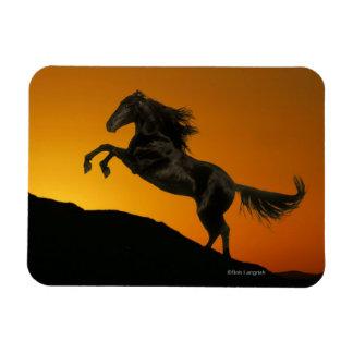 Fantasy Horses: Mountain Sunset Magnet