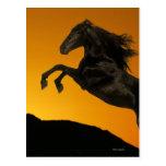 Fantasy Horses: Mountain Sunset Postcards
