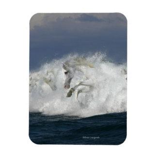 Fantasy Horses: Sea Magnet