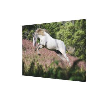 Fantasy Horses: Spring Gallop Gallery Wrap Canvas