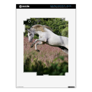 Fantasy Horses: Spring Gallop iPad 3 Decals