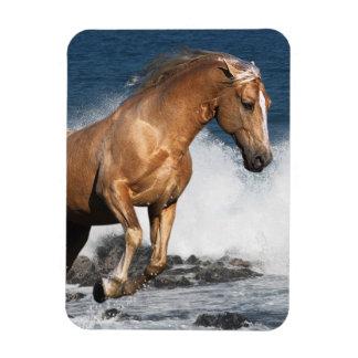 Fantasy Horses: Summer Splash Magnet
