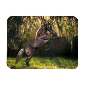 Fantasy Horses: Warrior Prince Magnet