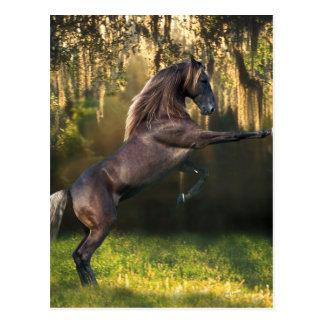 Fantasy Horses: Warrior Prince Post Card