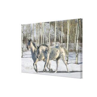 Fantasy Horses: Winter Wonderland Canvas Print