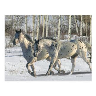 Fantasy Horses Winter Wonderland Postcard