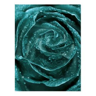 Fantasy Teal Rose Postcard
