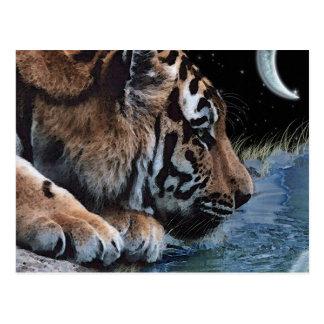Fantasy Tiger & Moon Postcards