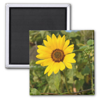 Farewell Summer-Sunflower 2 Inch Square Magnet