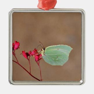farfalla, natura, fiore, fiori, piante, Ali, Adorno Navideño Cuadrado De Metal