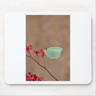 farfalla, natura, fiore, fiori, piante, Ali, inset Tapete De Ratón