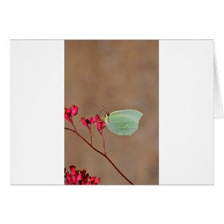 farfalla, natura, fiore, fiori, piante, Ali, inset Tarjeta De Felicitación