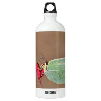 farfalla,natura,fiore,fiori,piante,ali,insetto,fot aluminum water bottle