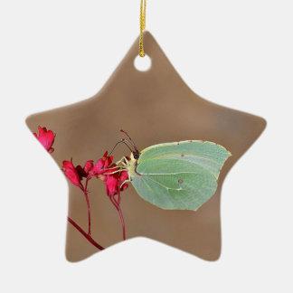 farfalla,natura,fiore,fiori,piante,ali,insetto,fot ceramic ornament