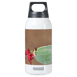 farfalla,natura,fiore,fiori,piante,ali,insetto,fot insulated water bottle