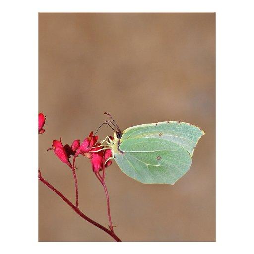 farfalla,natura,fiore,fiori,piante,ali,insetto,fot letterhead