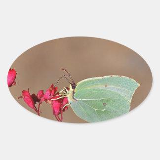 farfalla,natura,fiore,fiori,piante,ali,insetto,fot oval sticker