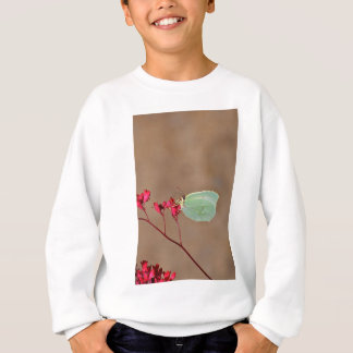 farfalla,natura,fiore,fiori,piante,ali,insetto,fot sweatshirt