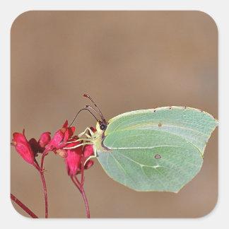 farfalla, natura, fiore, fiori, piante, Ali, Pegatina Cuadrada