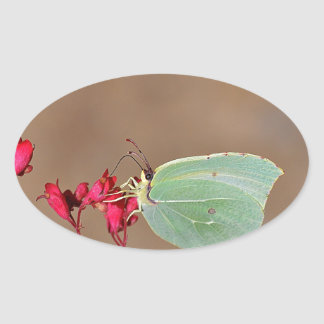 farfalla, natura, fiore, fiori, piante, Ali, Pegatina Ovalada
