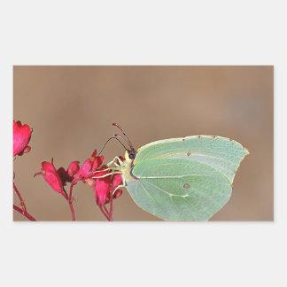 farfalla, natura, fiore, fiori, piante, Ali, Pegatina Rectangular