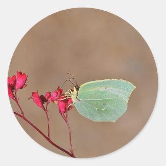 farfalla, natura, fiore, fiori, piante, Ali, Pegatina Redonda