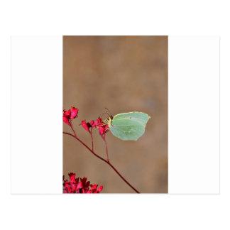 farfalla, natura, fiore, fiori, piante, Ali, Postal