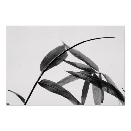Fargesia sp. Bamboo in Black and White Poster