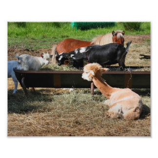 Farm Animal Barnyard Friends Cute 10x8 Print Photo Print
