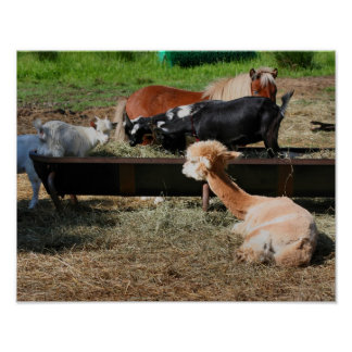 Farm Animal Friends Poster