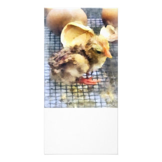 Farm Animals - Just Hatched Picture Card