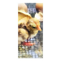 Farm Animals - Just Hatched Rack Card