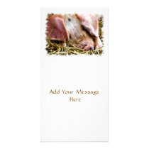 FARM ANIMALS, PIGS CARD