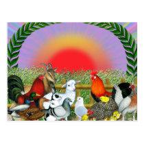 Farm Animals Postcard