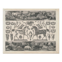 Farm Animals Print 1800's Cows Sheep Horse Pigs